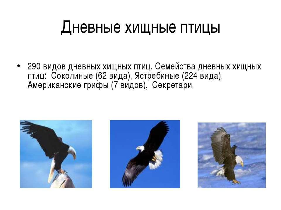 Дневные хищные птицы 290 видов дневных хищных птиц. Семейства дневных хищных ...