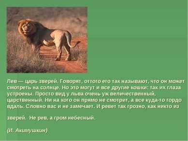 Лев — царь зверей. Говорят, оттого его так называют, что он может смотреть на...