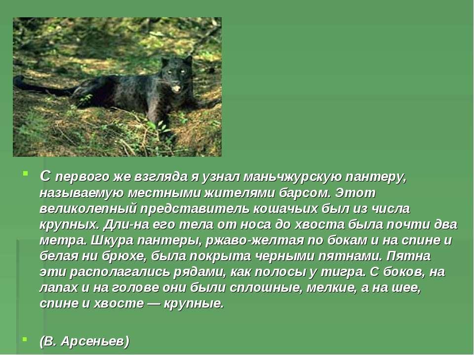 С первого же взгляда я узнал маньчжурскую пантеру, называемую местными жителя...