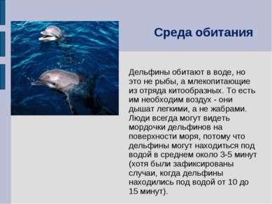 Дельфины обитают в воде, но это не рыбы, а млекопитающие из отряда китообразн...