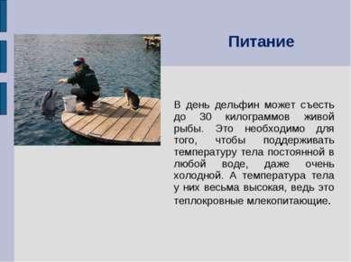В день дельфин может съесть до 30 килограммов живой рыбы. Это необходимо для ...