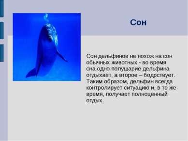 Сон дельфинов не похож на сон обычных животных - во время сна одно полушарие ...