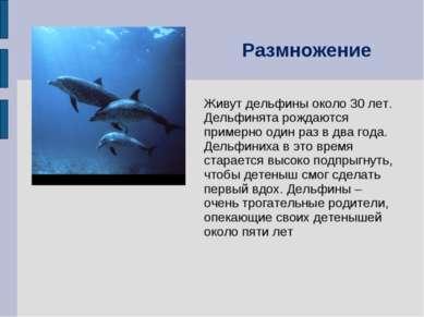 Живут дельфины около 30 лет. Дельфинята рождаются примерно один раз в два год...