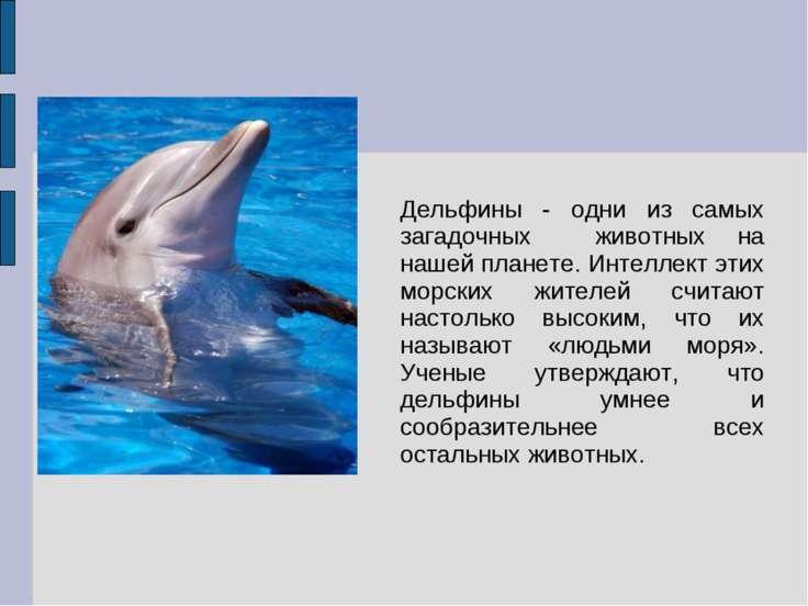 Дельфины - одни из самых загадочных животных на нашей планете. Интеллект этих...