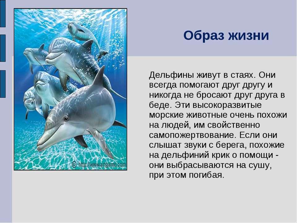 Дельфины живут в стаях. Они всегда помогают друг другу и никогда не бросают д...