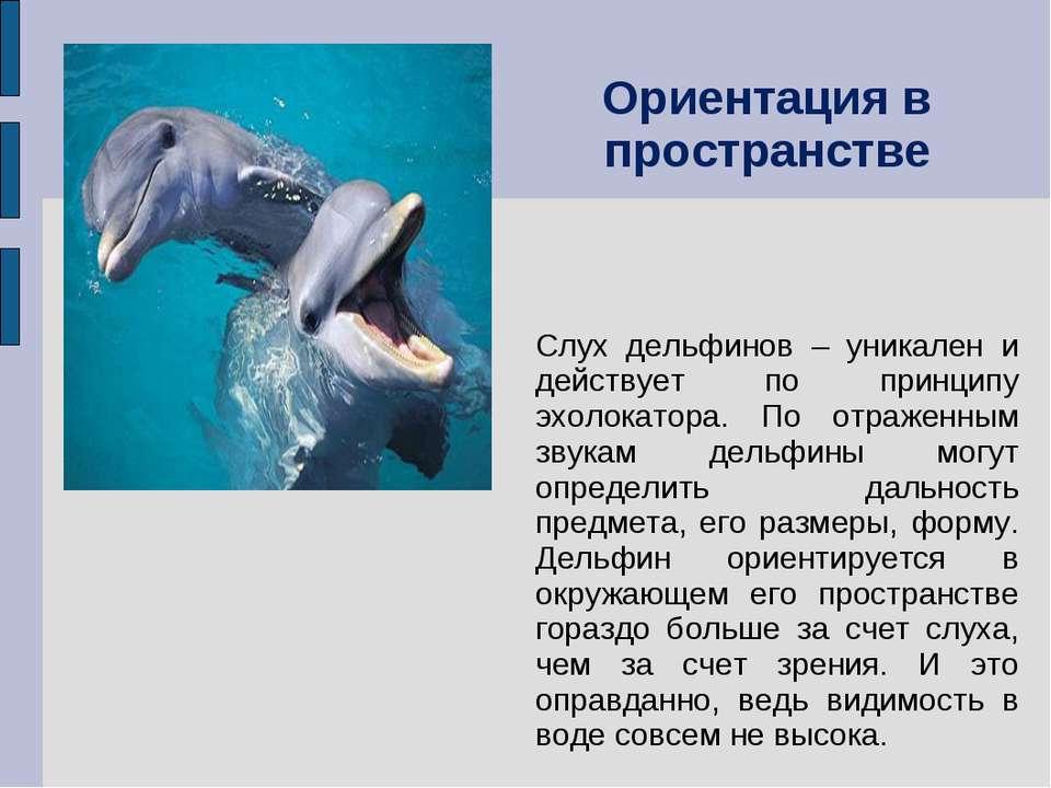 Слух дельфинов – уникален и действует по принципу эхолокатора. По отраженным ...