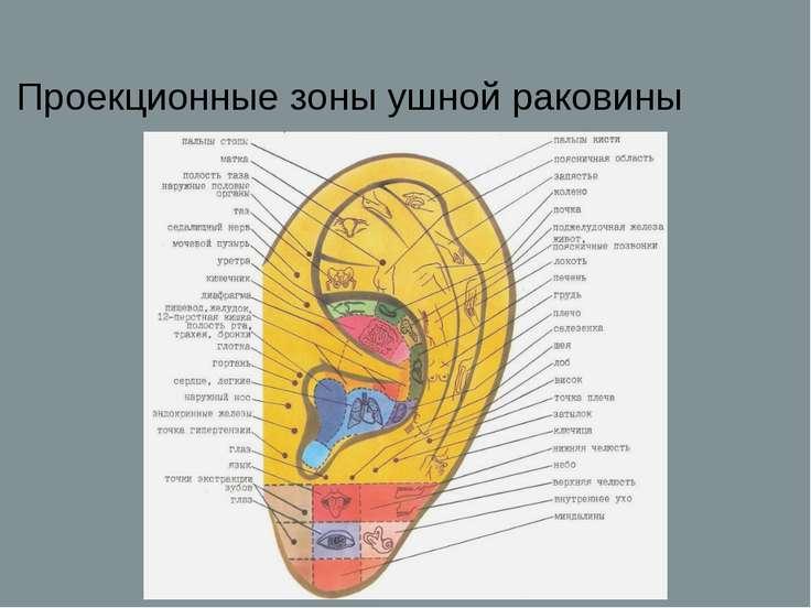 Проекционные зоны ушной раковины