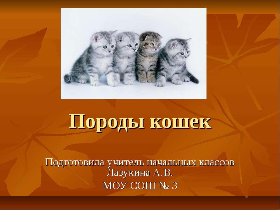 Породы кошек Подготовила учитель начальных классов Лазукина А.В. МОУ СОШ № 3