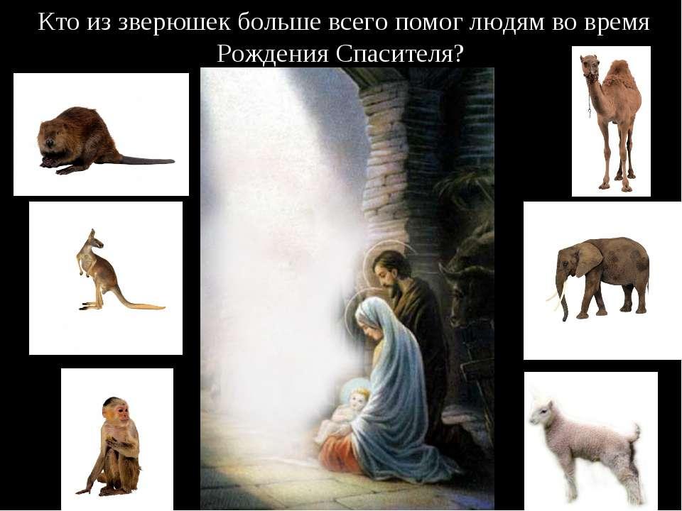 Кто из зверюшек больше всего помог людям во время Рождения Спасителя?