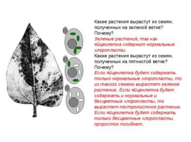 Какие растения вырастут из семян, полученных на зеленой ветке? Почему? Зелены...