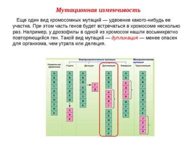 Еще один вид хромосомных мутаций — удвоение какого-нибудь ее участка. При это...