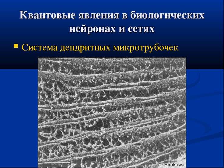 Квантовые явления в биологических нейронах и сетях Система дендритных микротр...