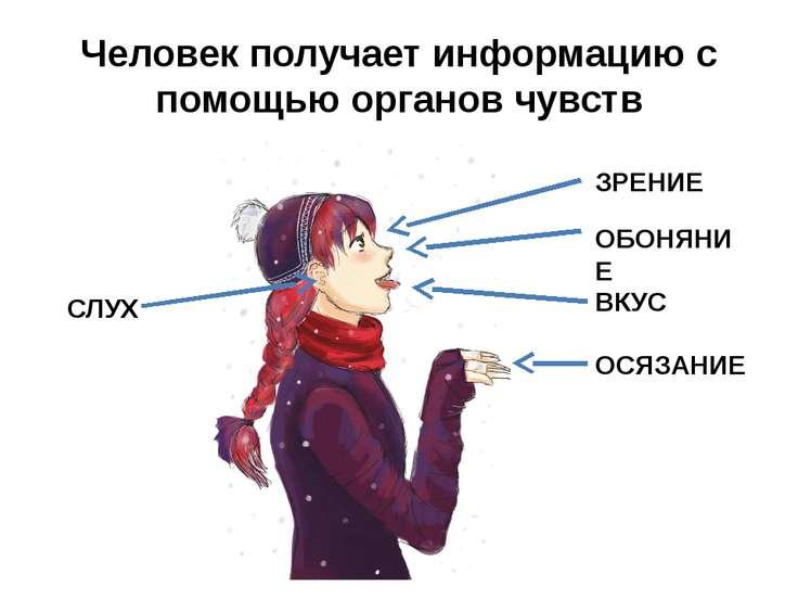 Человек получает информацию с помощью органов чувств ЗРЕНИЕ СЛУХ ОБОНЯНИЕ ОСЯ...