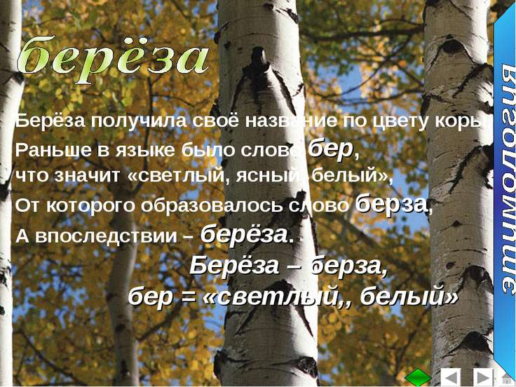 Берёза получила своё название по цвету коры. Раньше в языке было слово бер, ч...