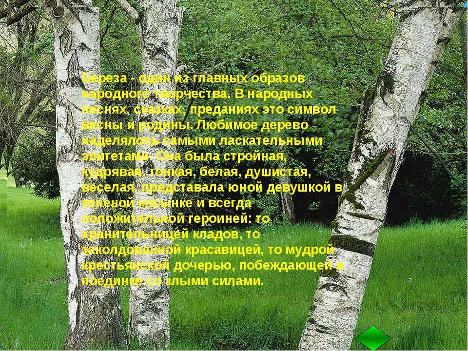 лиственное дерево с тонкими розовато- коричневыми веточками, с гладкой белой ...