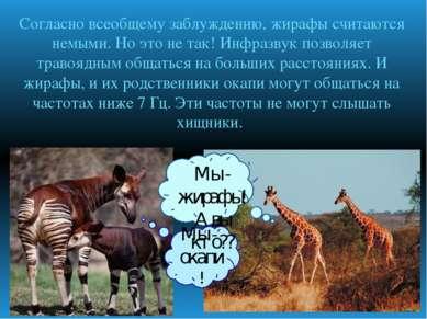 Согласно всеобщему заблуждению, жирафы считаются немыми. Но это не так! Инфра...