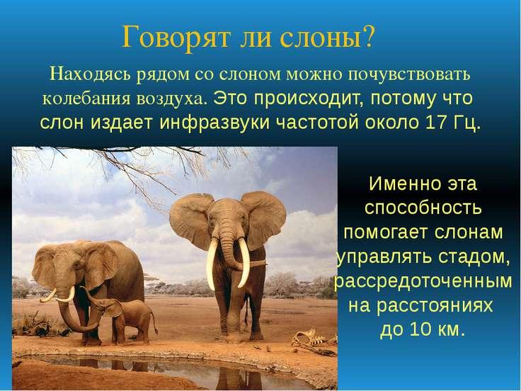 Говорят ли слоны? Находясь рядом со слоном можно почувствовать колебания возд...