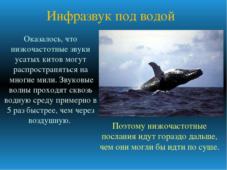 Инфразвук под водой Оказалось, что низкочастотные звуки усатых китов могут ра...