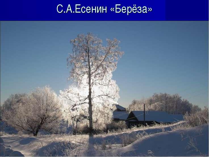 С.А.Есенин «Берёза»