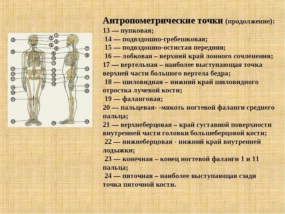 Антропометрические точки (продолжение): 13 — пупковая; 14 — подвздошно-гребеш...