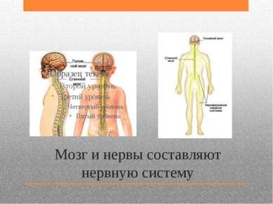 Мозг и нервы составляют нервную систему