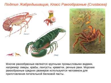 Подтип Жабродышащие, Класс Ракообразные (Crustacea) Многие ракообразные являю...