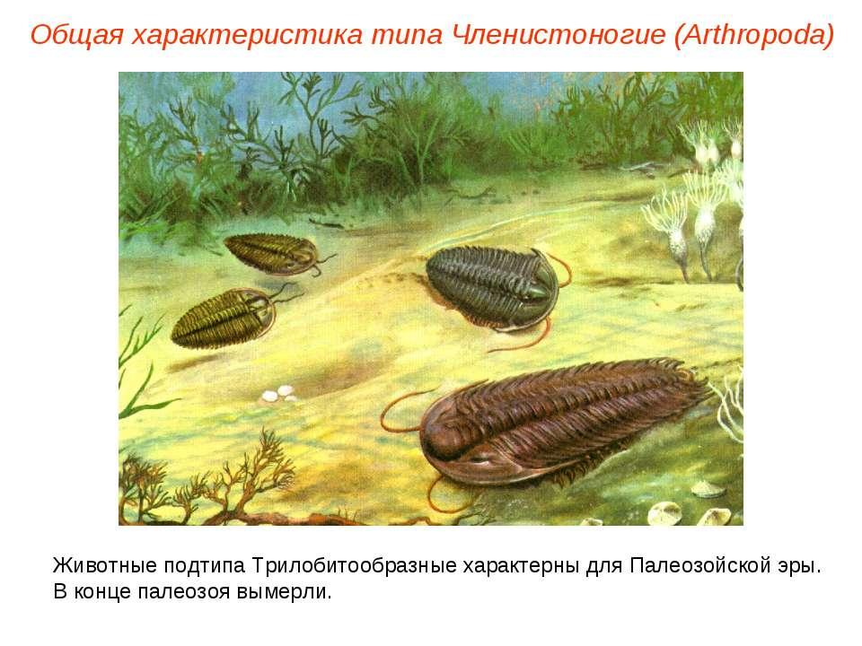 Общая характеристика типа Членистоногие (Arthropoda) Животные подтипа Трилоби...
