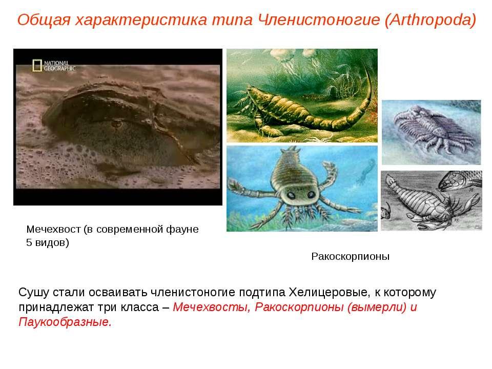 Общая характеристика типа Членистоногие (Arthropoda) Сушу стали осваивать чле...