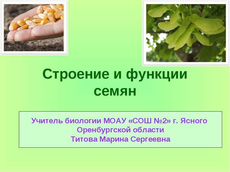 Строение и функции семян Учитель биологии МОАУ «СОШ №2» г. Ясного Оренбургско...
