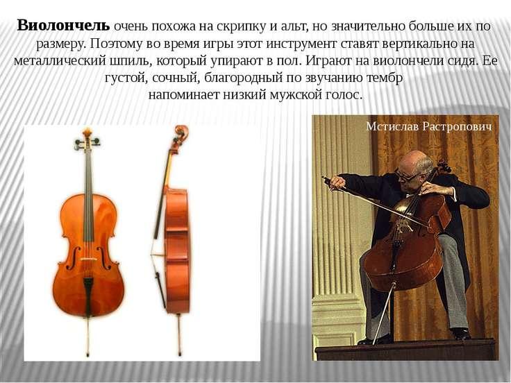 Виолончель очень похожа на скрипку и альт, но значительно больше их по размер...