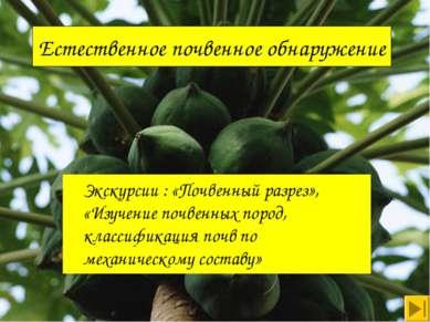 Естественное почвенное обнаружение Экскурсии : «Почвенный разрез», «Изучение ...