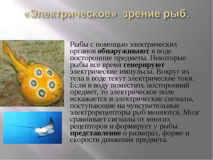 Рыбы с помощью электрических органов обнаруживают в воде посторонние предметы...