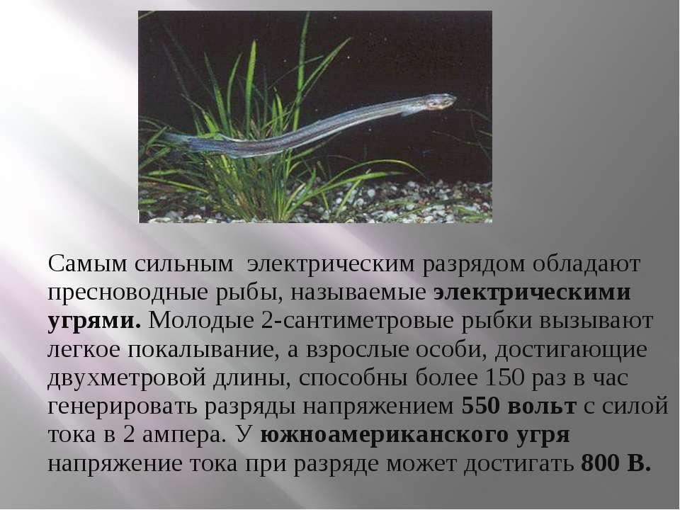 Самым сильным электрическим разрядом обладают пресноводные рыбы, называемые ...