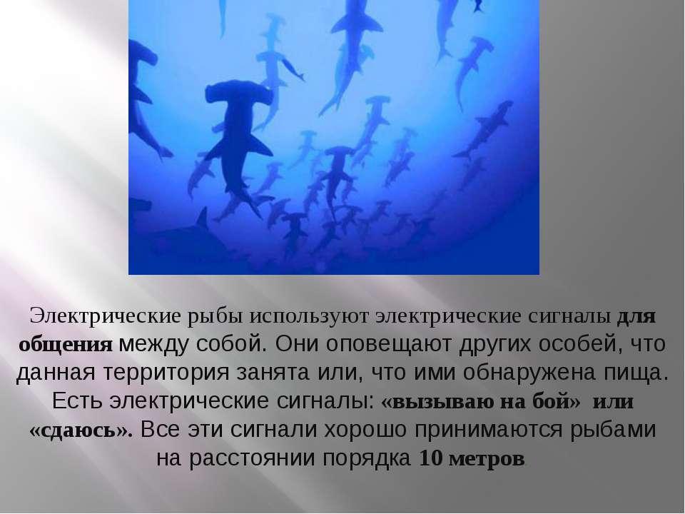 Электрические рыбы используют электрические сигналы для общения между собой. ...