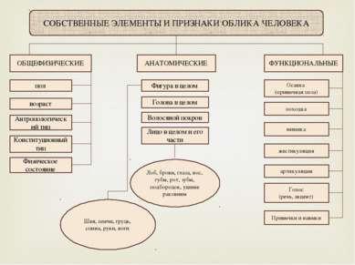 СОБСТВЕННЫЕ ЭЛЕМЕНТЫ И ПРИЗНАКИ ОБЛИКА ЧЕЛОВЕКА ОБЩЕФИЗИЧЕСКИЕ АНАТОМИЧЕСКИЕ ...