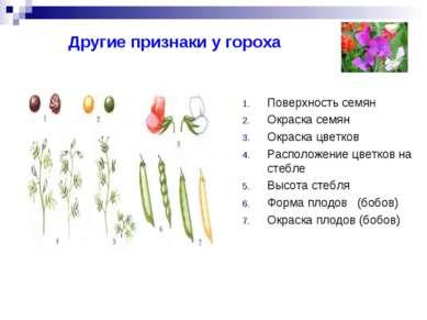 Другие признаки у гороха Поверхность семян Окраска семян Окраска цветков Расп...