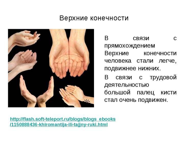 Верхние конечности В связи с прямохождением Верхние конечности человека стали...