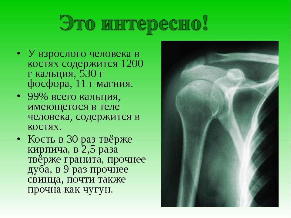 У взрослого человека в костях содержится 1200 г кальция, 530 г фосфора, 11 г ...