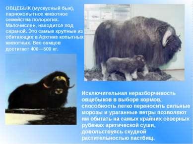 ОВЦЕБЫК (мускусный бык), парнокопытное животное семейства полорогих. Малочисл...