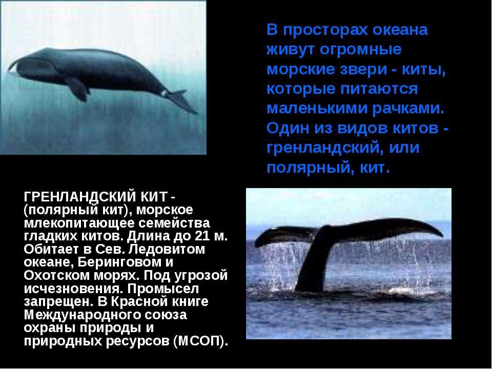 В просторах океана живут огромные морские звери - киты, которые питаются мале...