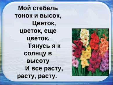 Мой стебель тонок и высок, Цветок, цветок, еще цветок. Тянусь я к солнцу в вы...