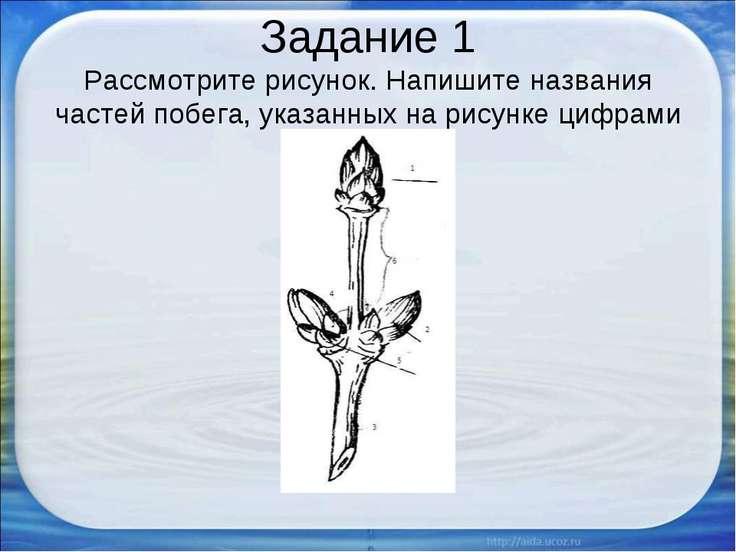 Задание 1 Рассмотрите рисунок. Напишите названия частей побега, указанных на ...
