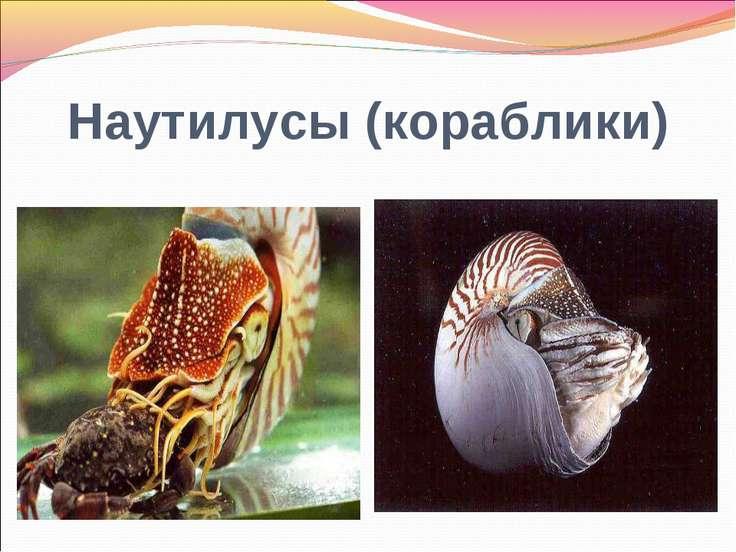 Наутилусы (кораблики)