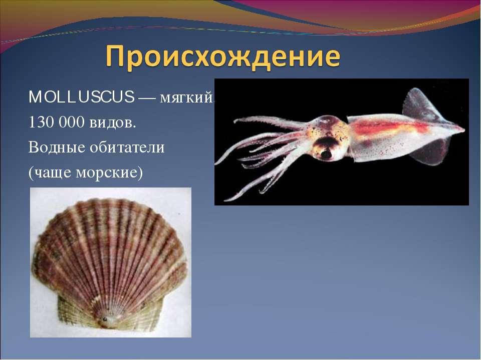 MOLLUSCUS — мягкий. 130 000 видов. Водные обитатели (чаще морские)