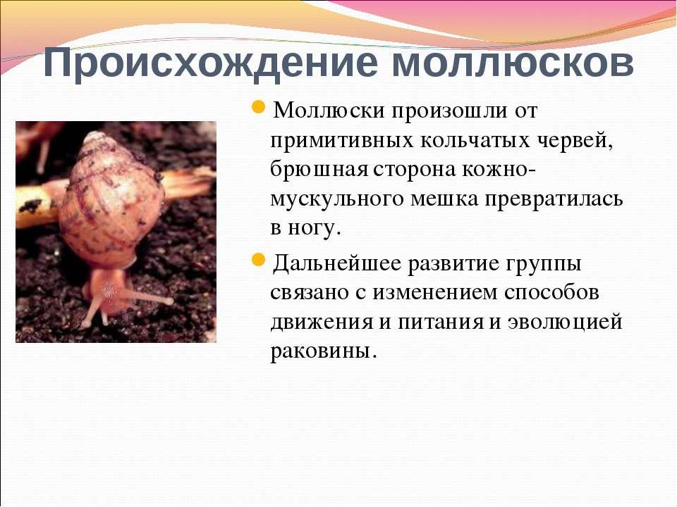 Происхождение моллюсков Моллюски произошли от примитивных кольчатых червей, б...