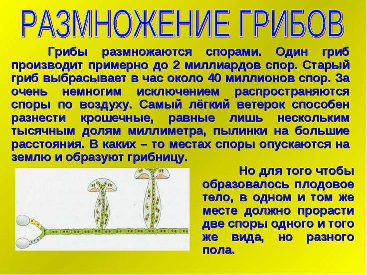 Грибы размножаются спорами. Один гриб производит примерно до 2 миллиардов спо...