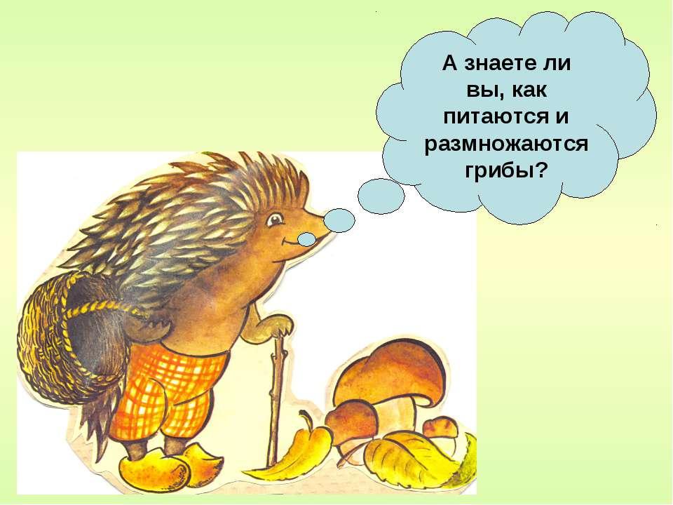 А знаете ли вы, как питаются и размножаются грибы?