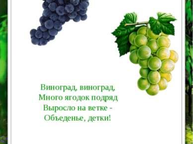 ВИНОГРАД Виноград, виноград, Много ягодок подряд Выросло на ветке - Объеденье...