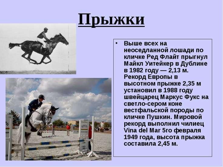 Прыжки Выше всех на неоседланной лошади по кличке Ред Флайт прыгнул Майкл Уит...