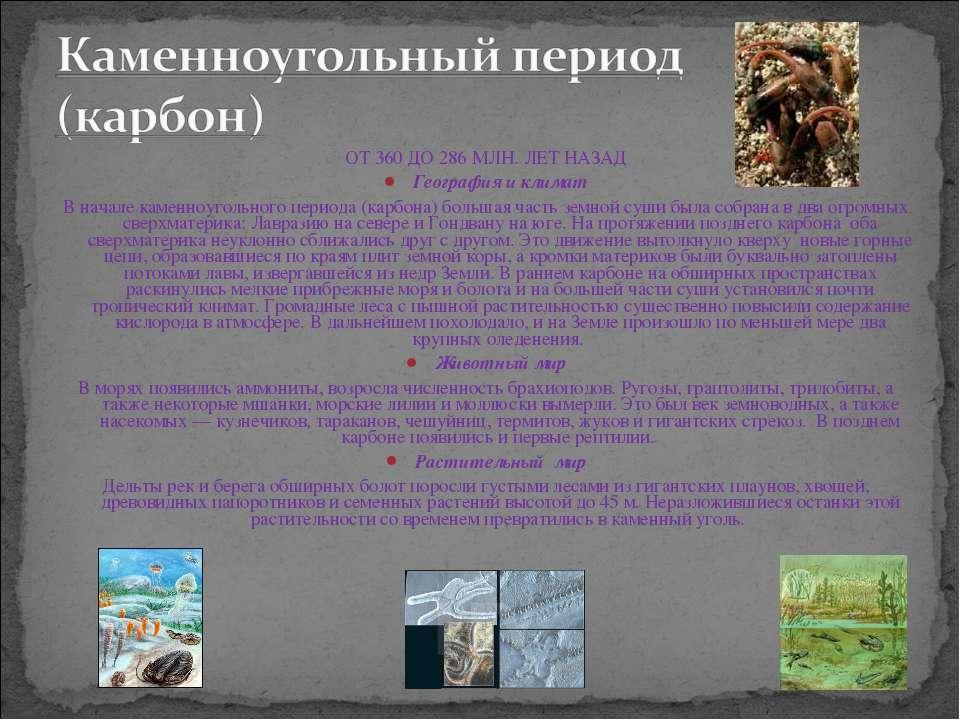 ОТ 360 ДО 286 МЛН. ЛЕТ НАЗАД География и климат В начале каменноугольного пер...